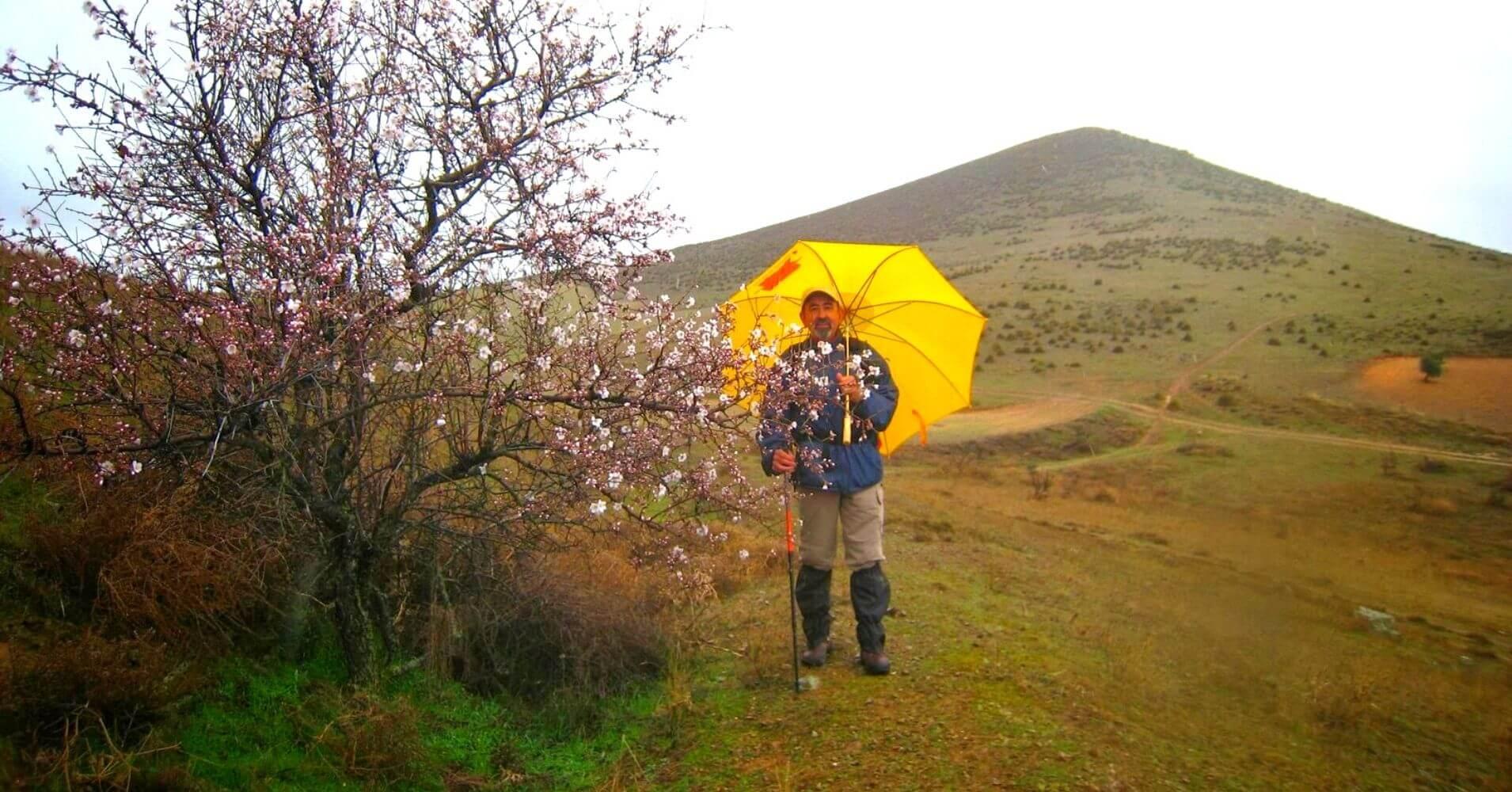 Almendro en Flor, Sierra de Nambroca y Cerro Marica. Toledo, Castilla La Mancha.