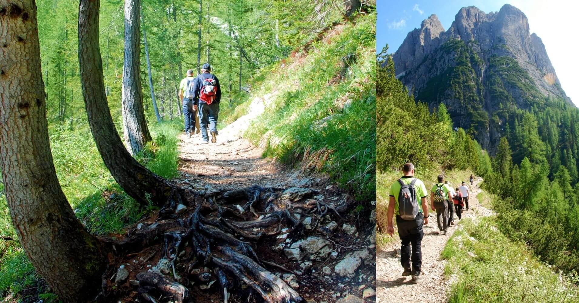 Bosque Camino del Lago di Sorapis. Cortina d' Ampezzo. Dolomitas, Belluno. Véneto. Italia.