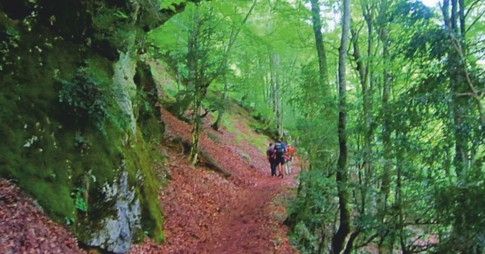 Bosque de Pacq (Bois du Pacq). Valle de Aspe. Nueva Aquitania. Pirineos Atlánticos. Francia.