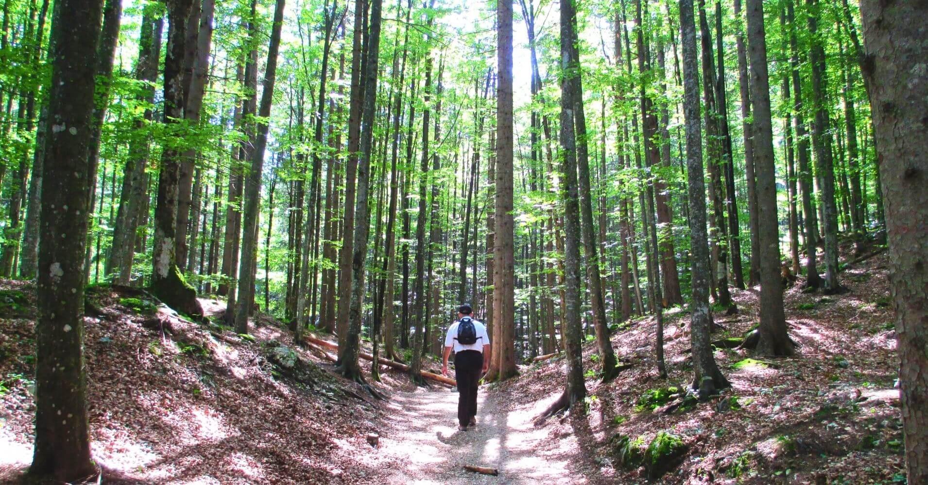 Bosque en las Gorgas de Leutaschklamm. Schanz, Leutasch. Región del Tirol. Austria.