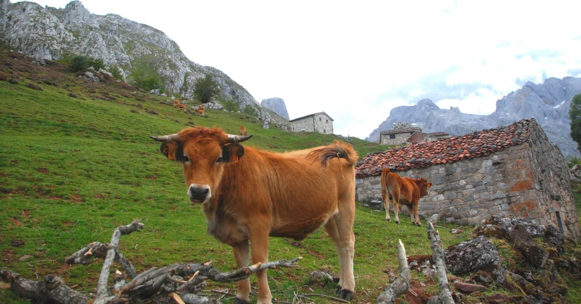 Collado de Pandébano y Refugio de la Tenerosa. Travesía de Picos de Europa. Asturias.