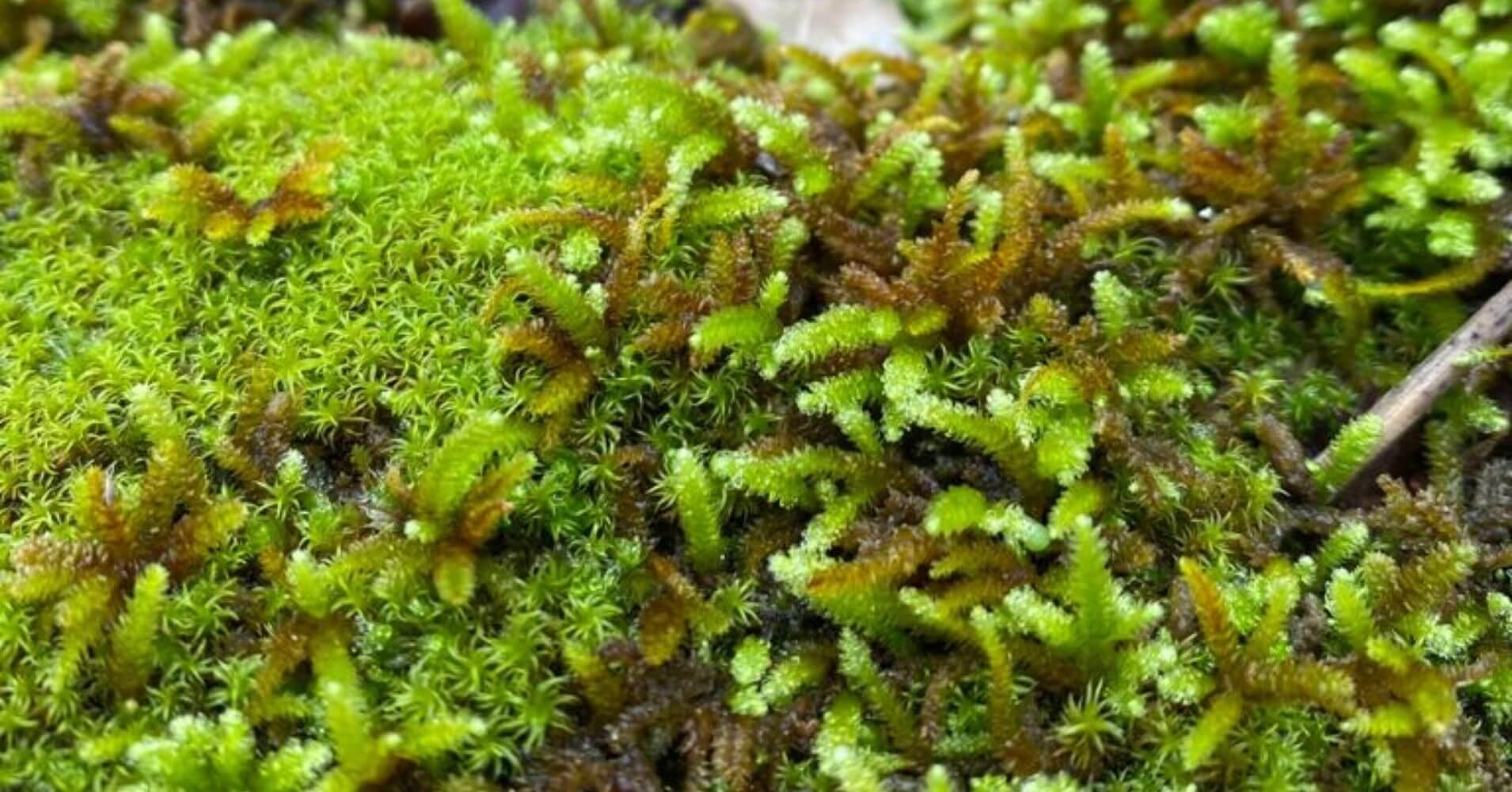 Flora del Parque Natural Valle de Alcudia y Sierra Madrona. Ciudad Real, Castilla La Mancha.