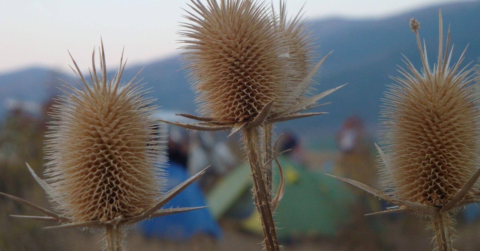 Guía Camping Castilla la Mancha