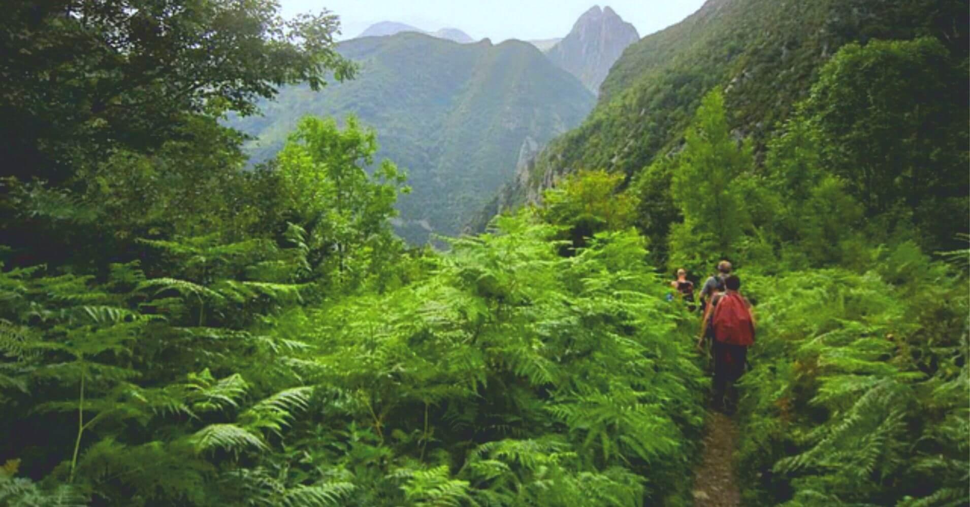 Helechos del Parque Nacional de los Pirineos. Nueva Aquitania. Occitania. Francia.