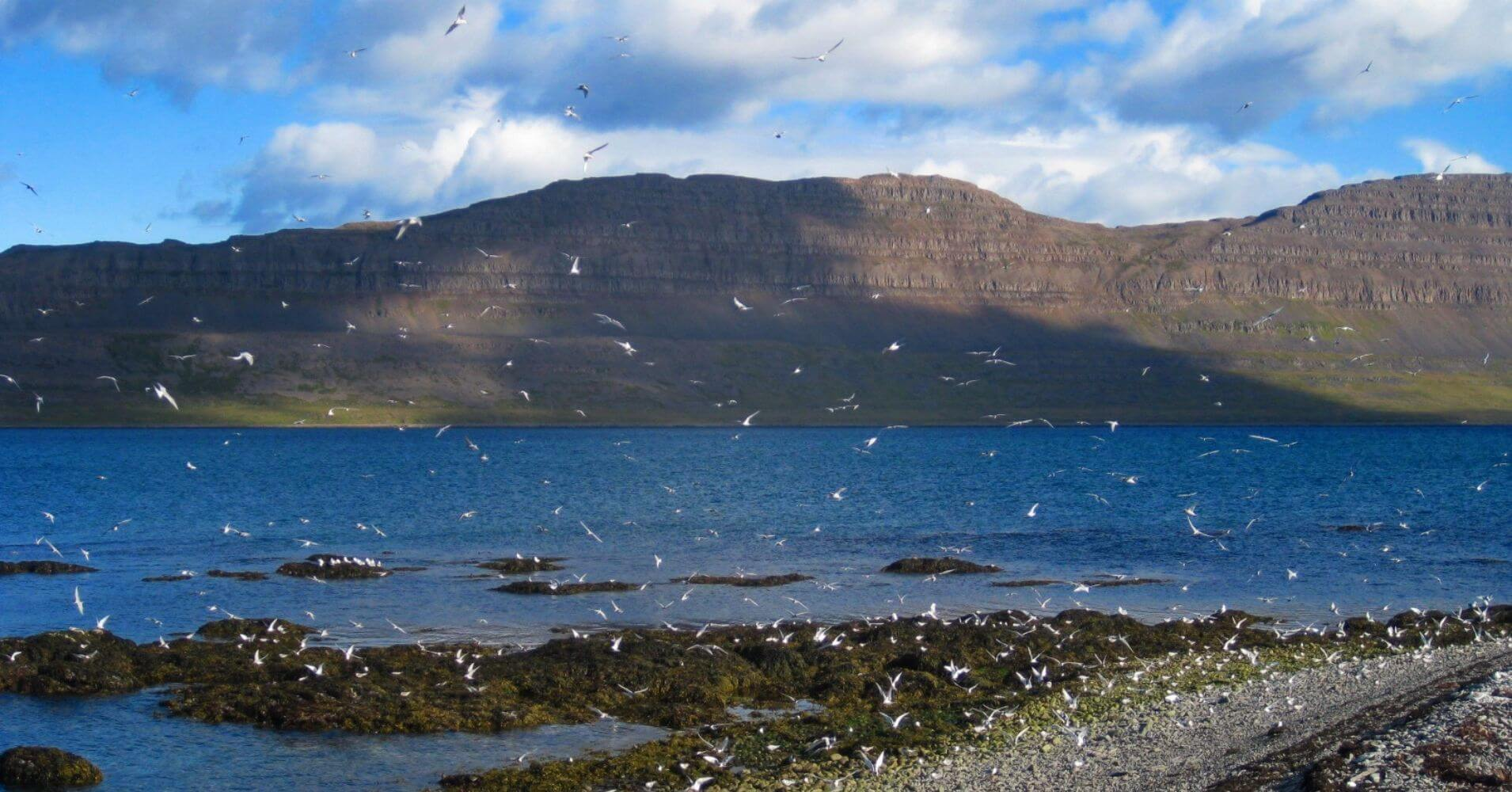Isla de Vigur. Ísafjörður. Vestfirðir en Islandia.