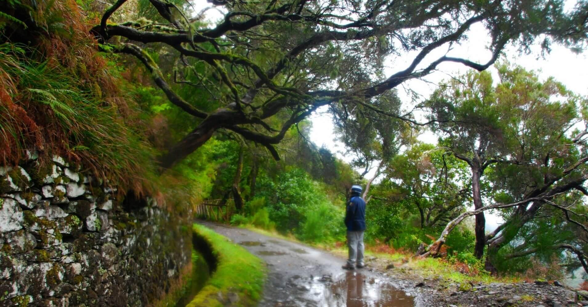 Levada de la Cascada do Risco en la Isla de Madeira. Portugal.