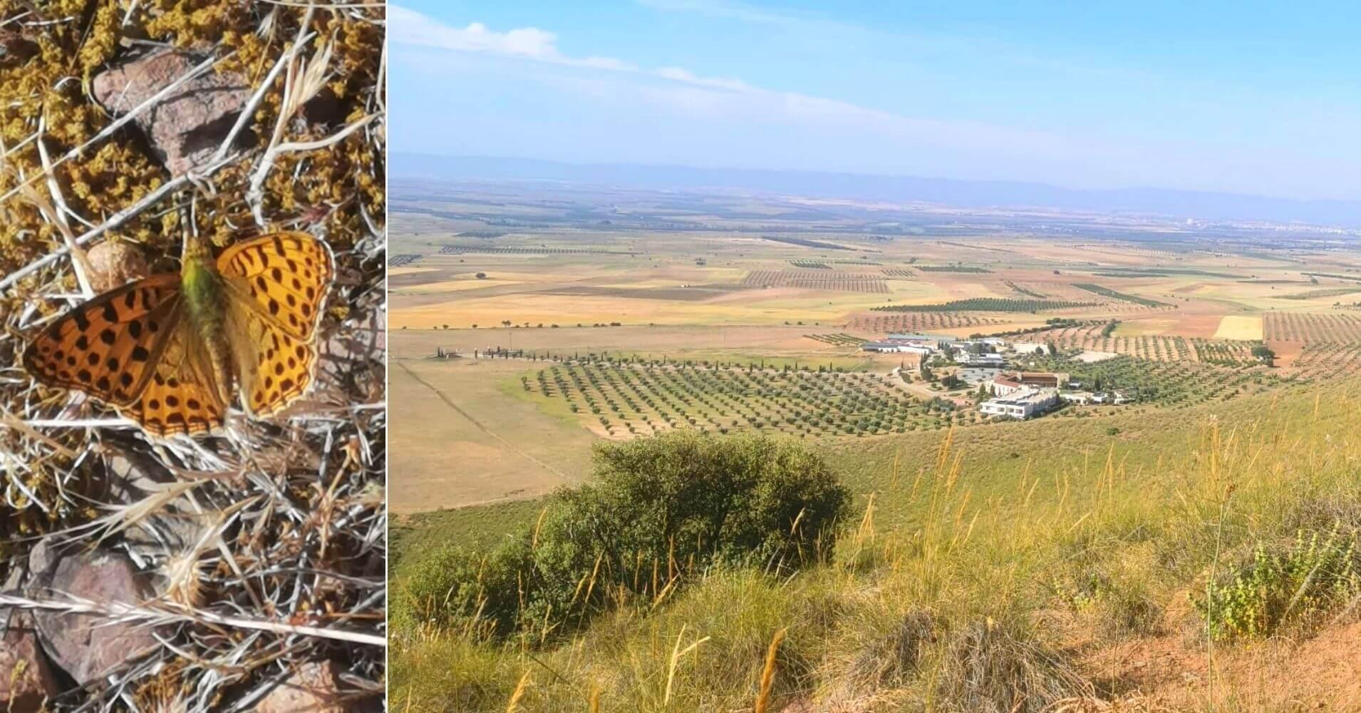 Mariposa y Subida a la Sierra de la Oliva. Almonacid de Toledo, Castilla la Mancha.