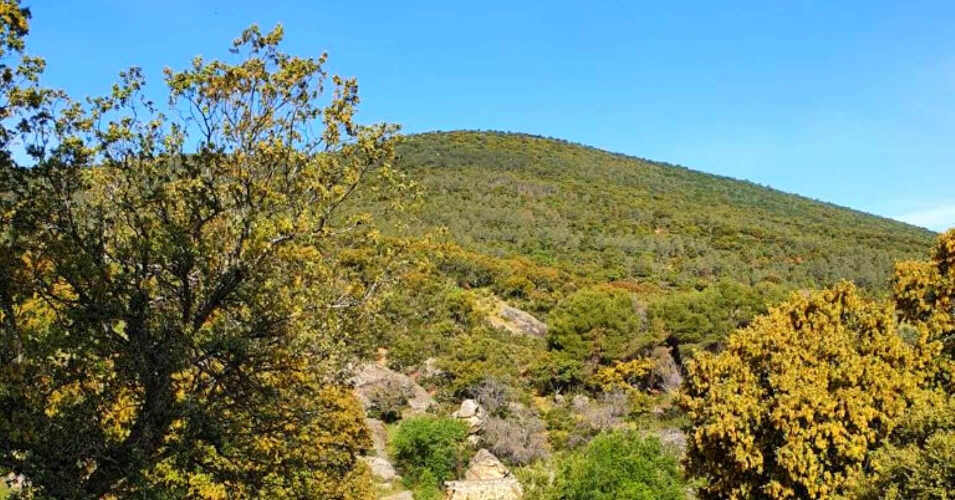 Montes de Toledo. Hontanar, Castilla La Mancha.