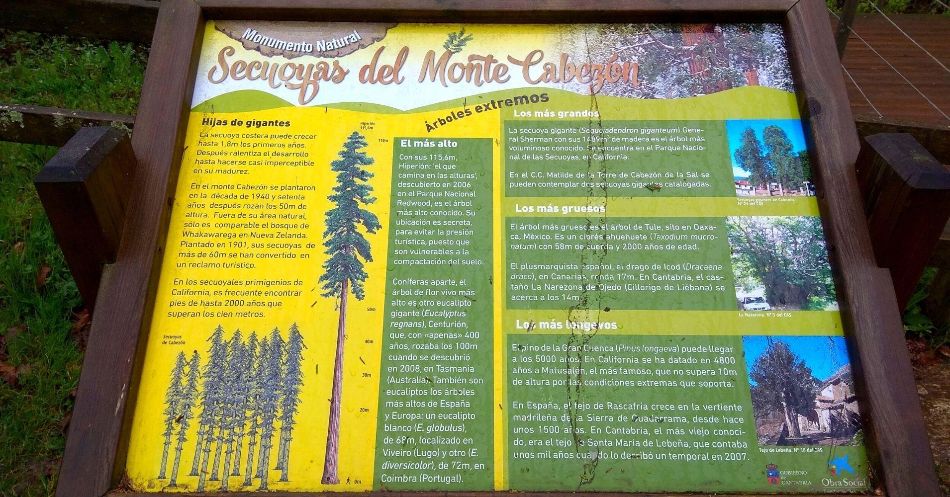 Panel Informativo Bosque de Secuoyas. Cabezón de la Sal, Cantabria.