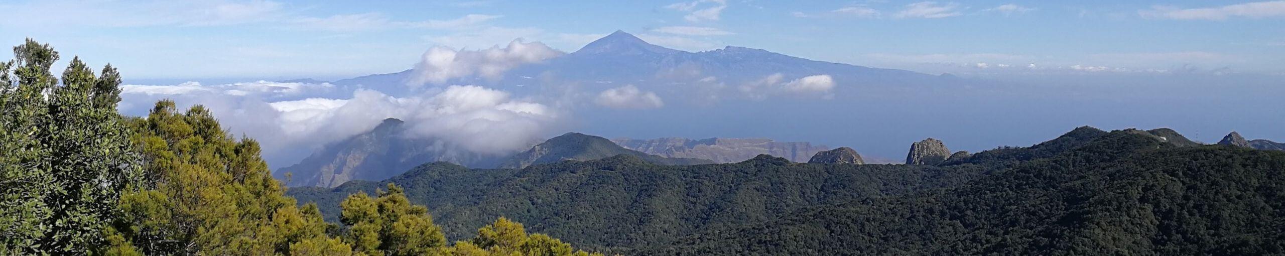 Parque Nacional de Garajonay, Isla de La Gomera. Islas Canarias.