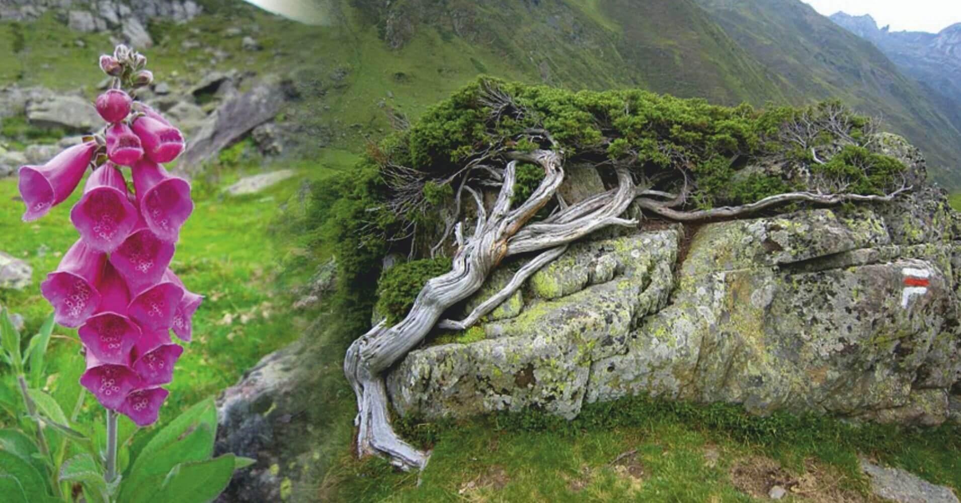 Parque Nacional Pirineos. Nueva Aquitania. Pirineos Atlánticos. Occitania, Altos Pirineos. Francia.