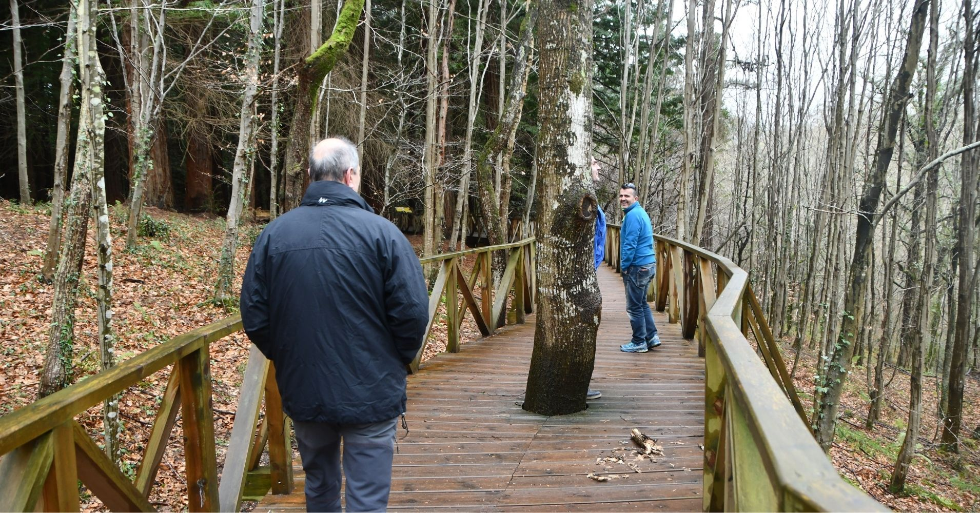 Pasarela del Bosque de Secuoyas. Cabezón de la Sal, Cantabria.