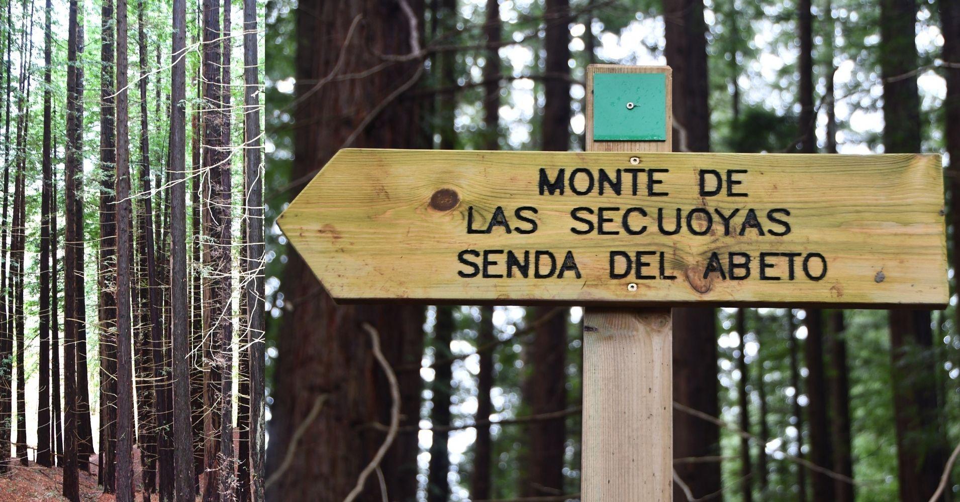 Senda del Abeto del Monte de las Secuoyas. Cabezón de la Sal, Cantabria.