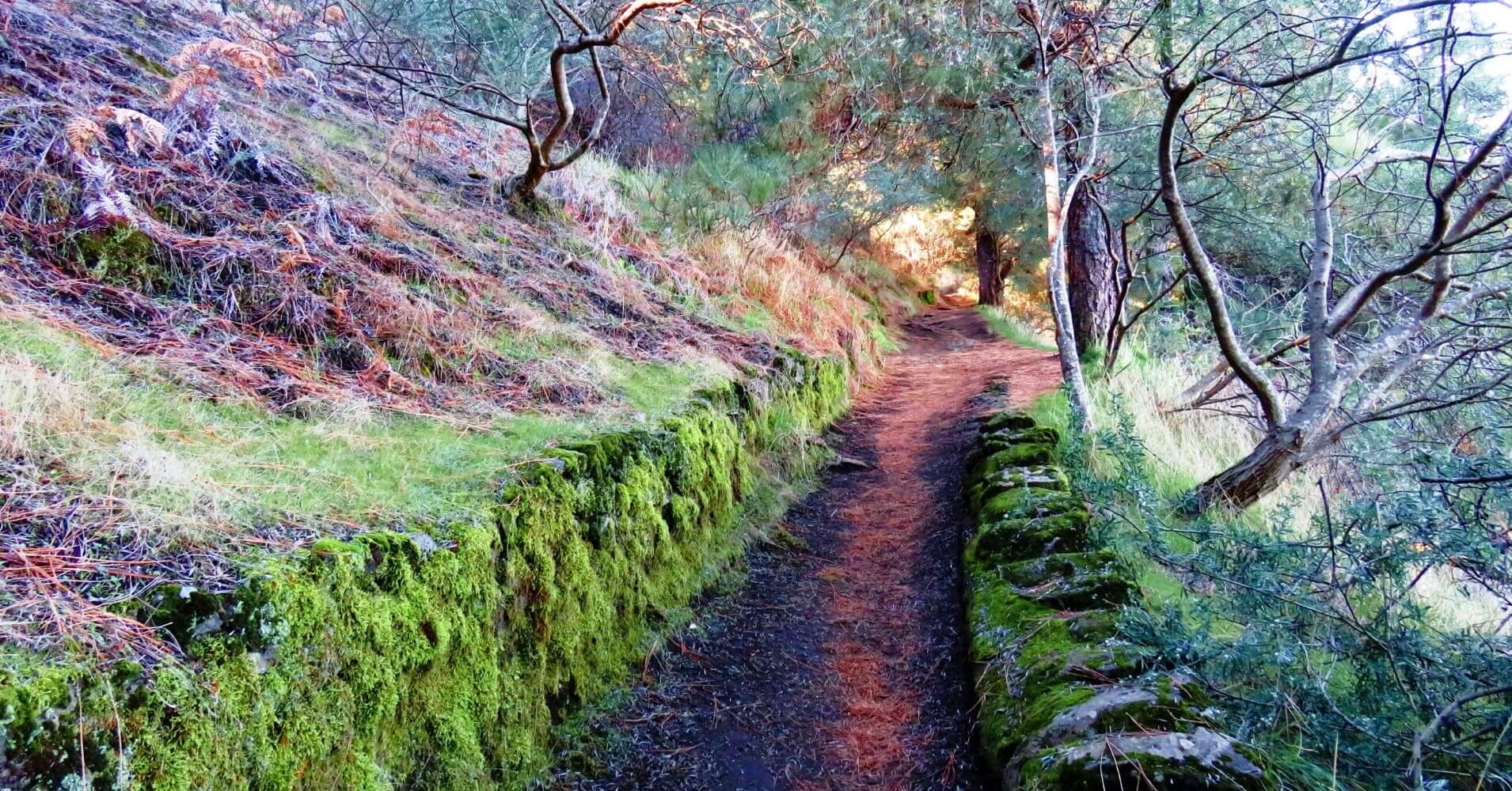 Sendero en el Parque Nacional de la Caldera de Taburiente. La Palma. Islas Canarias.
