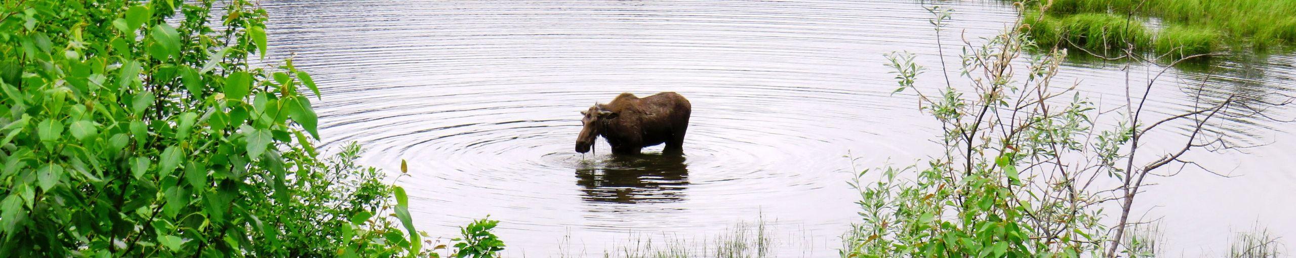 Una Semana en Alaska
