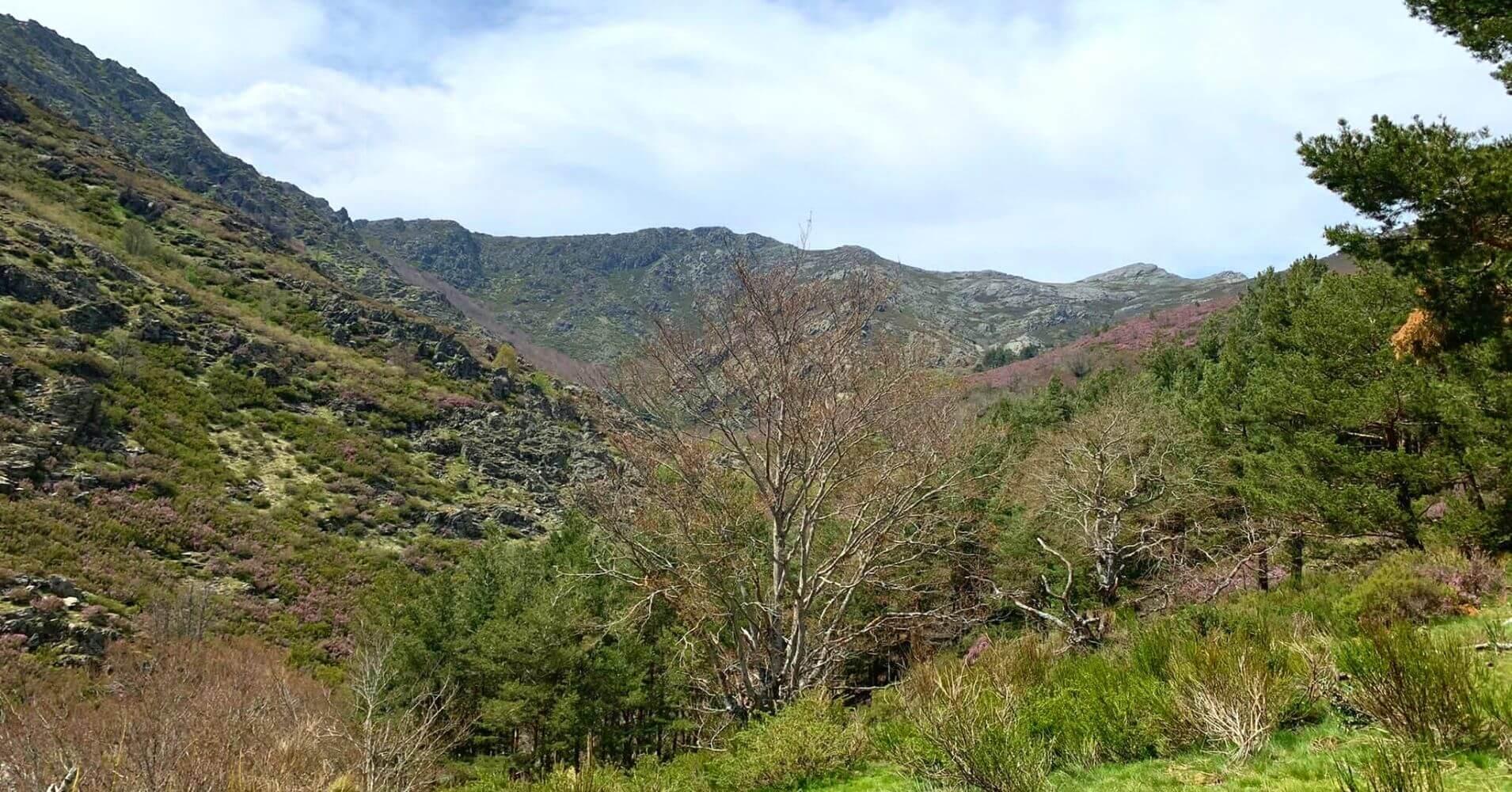 Zona de Vegetación del Río Sorbe. Sierra de Ayllón. Guadalajara, Castilla la Mancha.